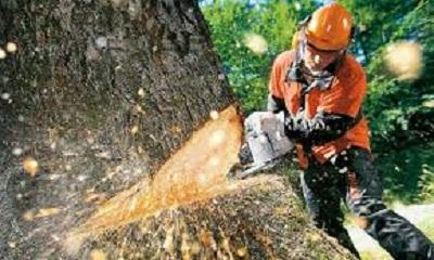 Formación e Información Inicial para sector forestal